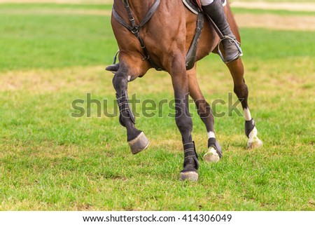 Horse legs at riding arena. - stock photo