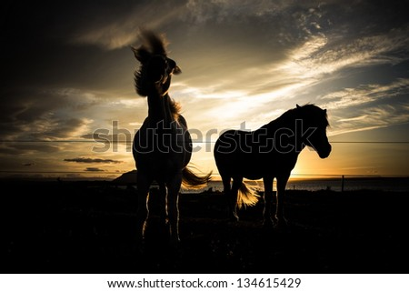 horse lighted by sunset sky
