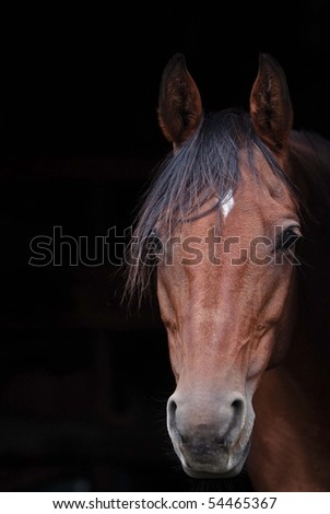 Horse looking out of barn