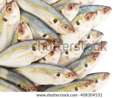 Horse mackerel fish isolated - stock photo