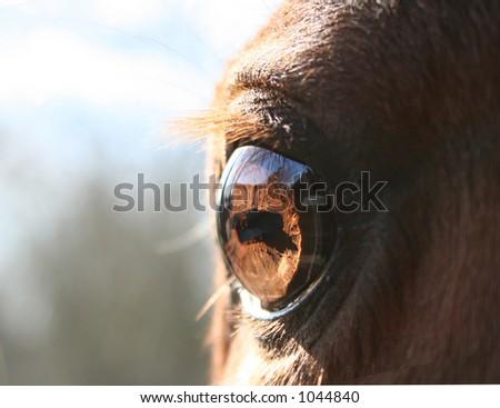 horse macro of eye - stock photo