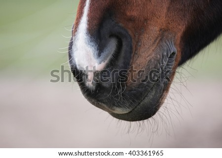 horse mouth closeup with white nose - stock photo
