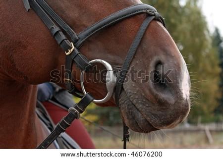 Horse nose - stock photo