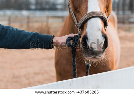 Horse nose. Horse close up. Holding horse. - stock photo