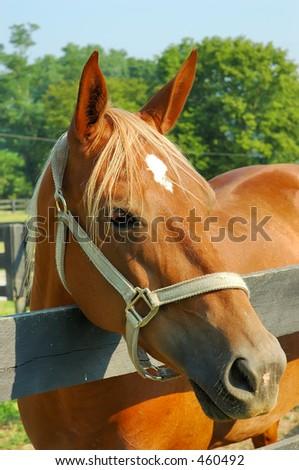 Horse on a farm in Kentucky, USA. - stock photo