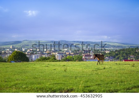 horse on a filed with cityscape behind