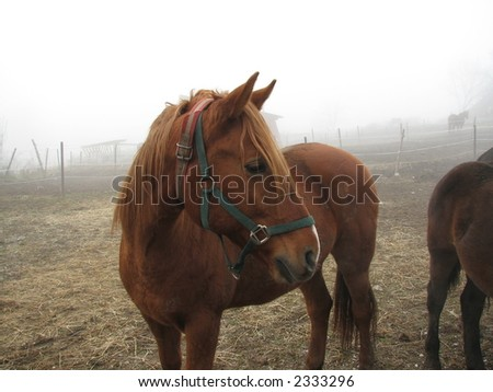 Horse on a frosty feedlot - stock photo