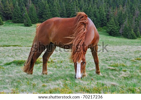 Horse on a hillside