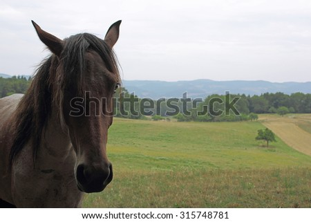 horse on a paddock