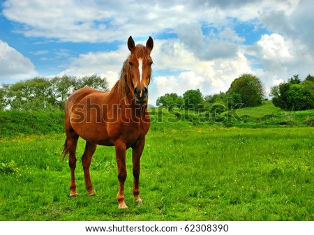 Horse on a pasture - stock photo
