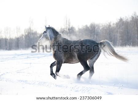 horse on a snow farm under a heavy snowfall - stock photo