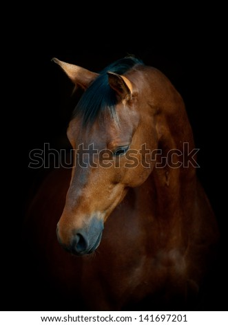 horse on black - stock photo