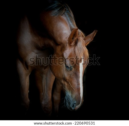 horse on black - stock photo
