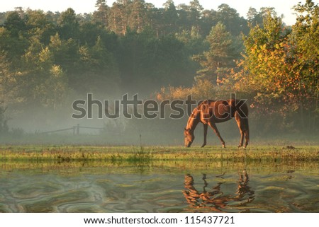 horse on fog meadow in morning reflected in the water - stock photo