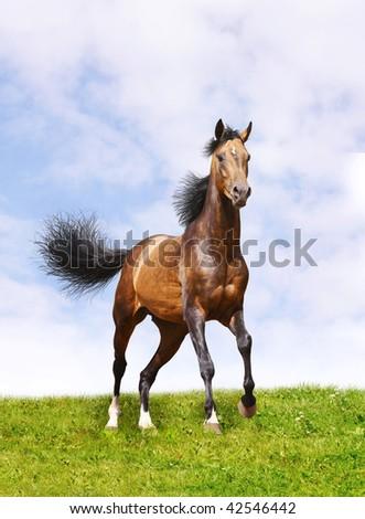horse on grass - stock photo