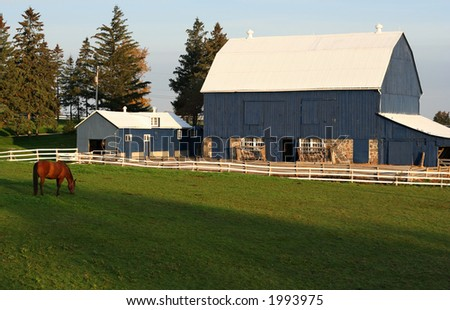 horse on green pastures - stock photo