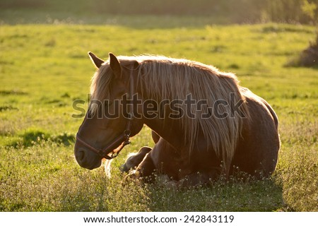 Horse on meadow in the rays of the setting sun - stock photo