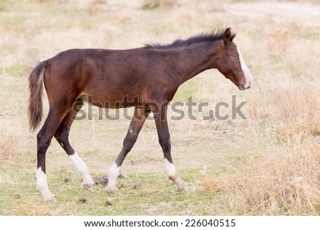 horse on nature - stock photo