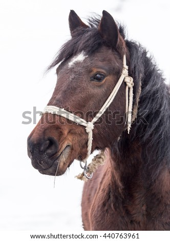 horse on nature in winter - stock photo