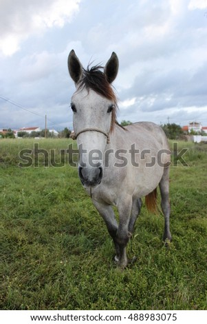 Horse on nature. Portrait of a horse,