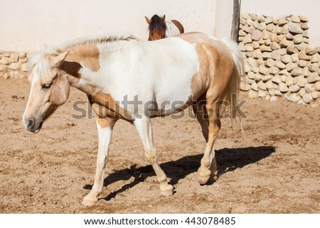 Horse on nature, portrait of a horse, brown horse - stock photo