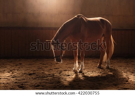 Horse on nature,  stands in the paddock - stock photo