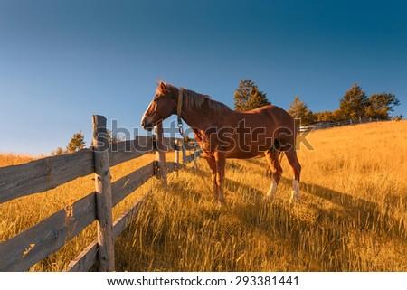 Horse on pasture. - stock photo