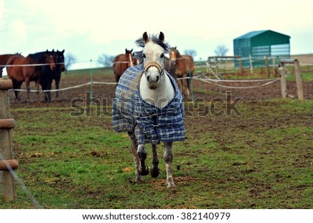 Horse on pasture - stock photo