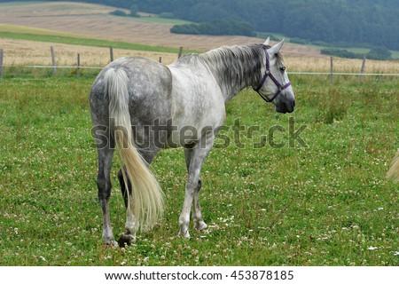 Big Horses Breeding Little Pony | just b.CAUSE