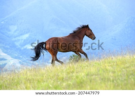 Horse on pasture in the summer in the mountains