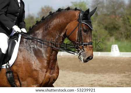 Horse on race, waiting for start - stock photo