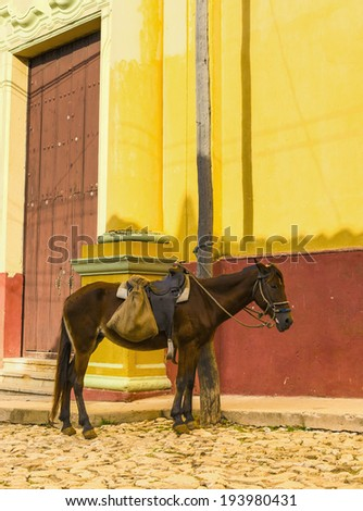 Horse on streets of small colonial town Trinidad, where people still use horses and oxen for transportation and field work. - stock photo