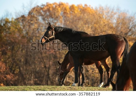 Horse on the background of autumn trees. - stock photo