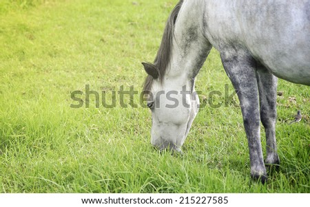 Horse on the farm grazing on the field - stock photo