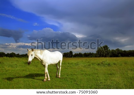 Horse on the field against a stormy sky - stock photo