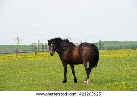 horse on the green field