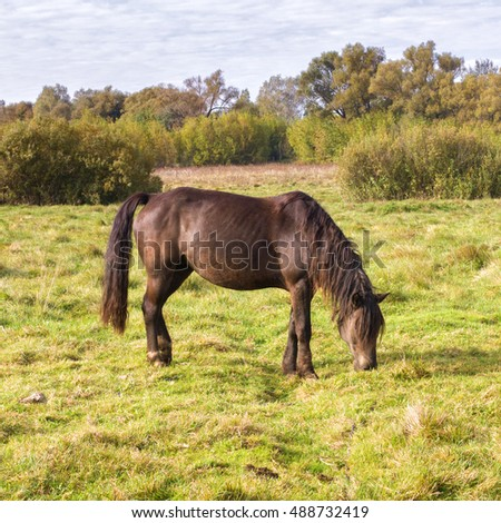Horse on the meadow