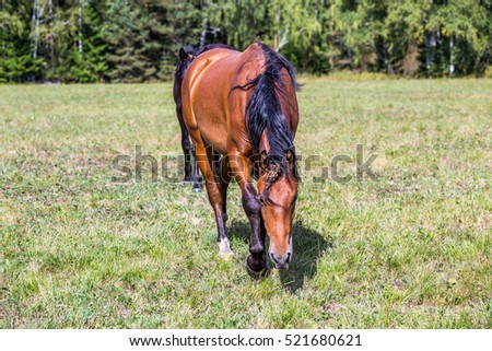 Horse on the meadow.