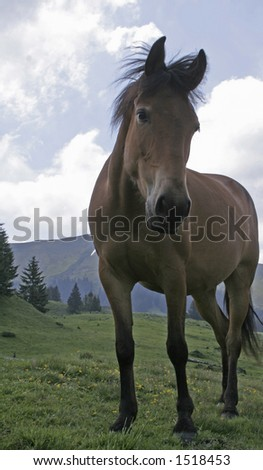 Horse on the mountain landscape