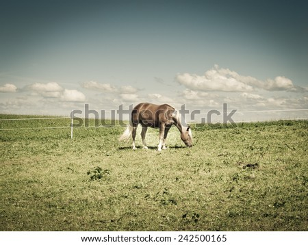 horse on the pasture - stock photo