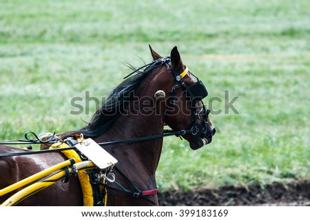 Horse on the racetrack in a rainy day