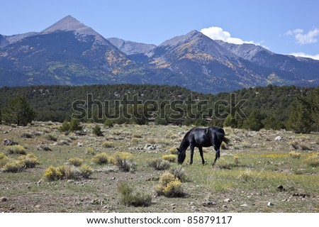 Horse on the range with a scenic backdrop of the Colorado Rocky Mountains
