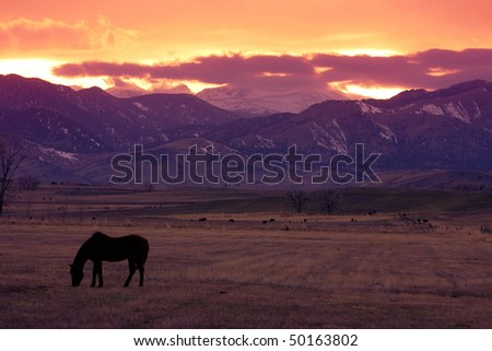 Horse out in the pasture with the Colorado Rocky Mountains and Sun setting. - stock photo