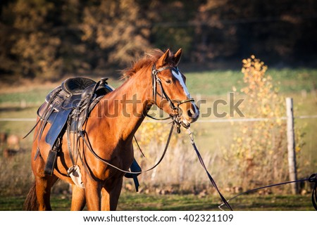 Horse outdoor shot. Horse on meadow, domestic horse farm shot. Beautiful horse outside the stable. Riding western horse. - stock photo