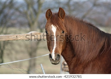 Horse outdoor shot. Horse on meadow, domestic horse farm shot. Beautiful horse outside the stable. Riding western purebreed horse. - stock photo