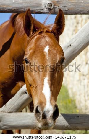 horse outdoors - stock photo