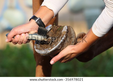 Horse owner is trimming hooves of a horse early morning - stock photo