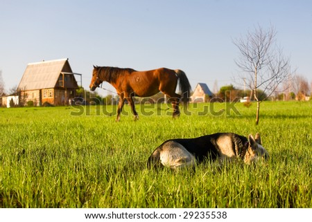 Horse pasture at summer. Cottage at background and alsatian dog at foreground. - stock photo