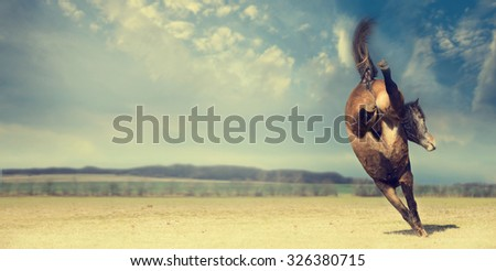 Horse plays and kick backwards on autumn pasture background, banner - stock photo