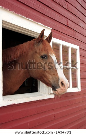 horse pokes his head out a window of the barn - stock photo
